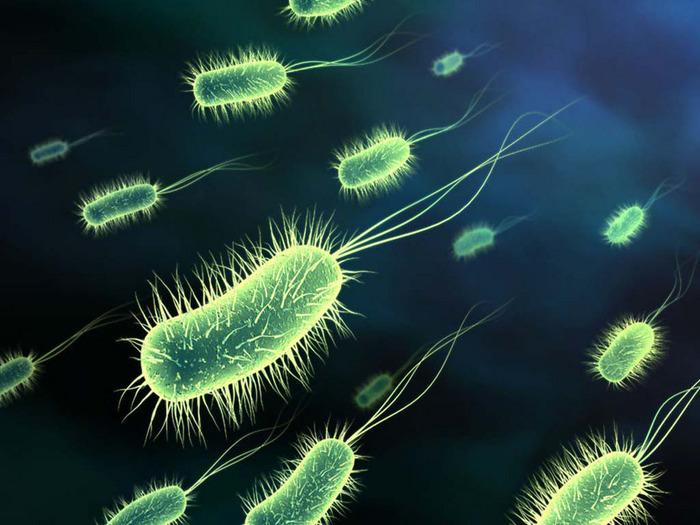 El metabolismo de los microorganismos