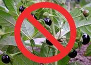 تسمم النباتات السامة