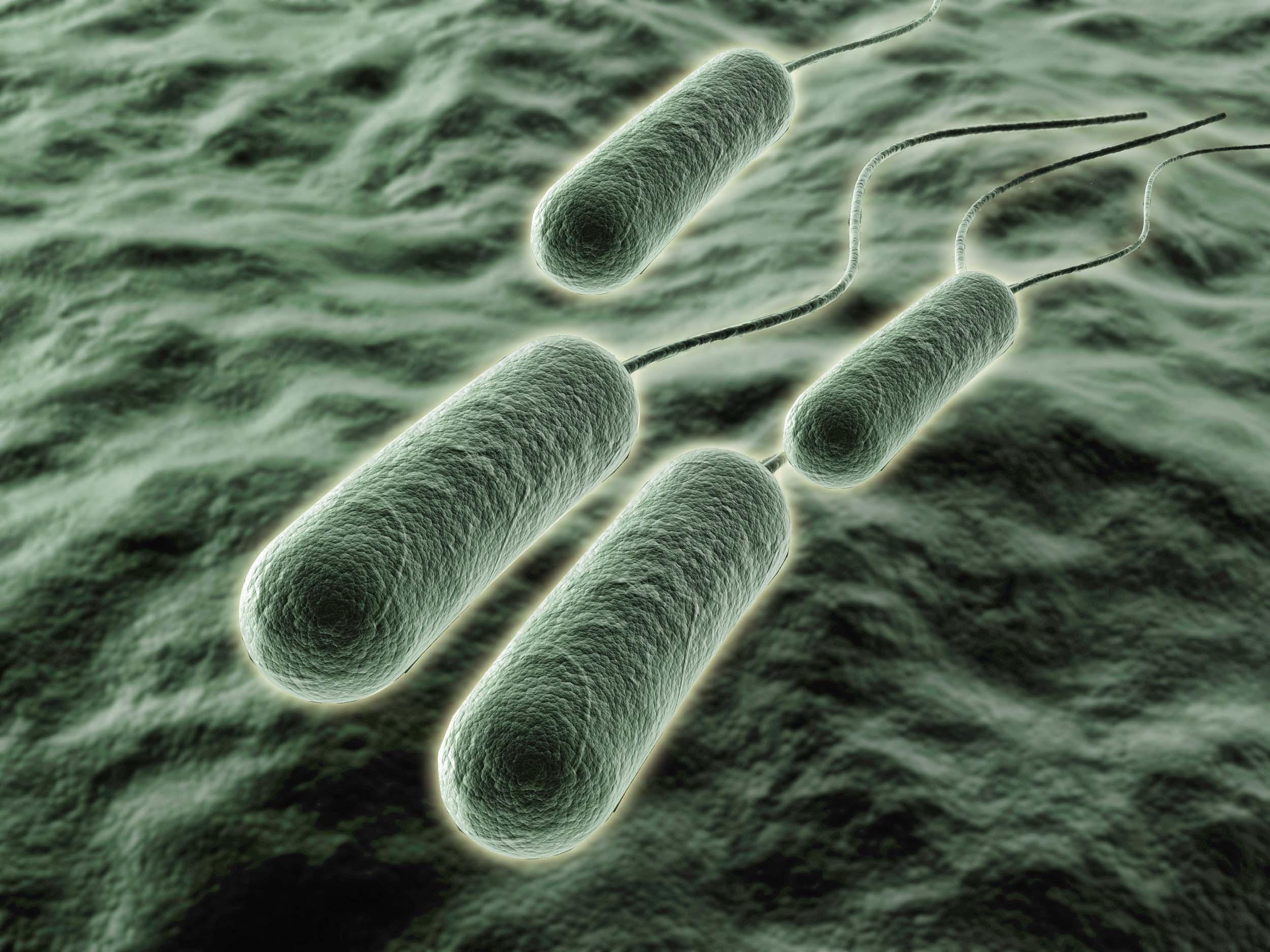 Multidrug resistant Pseudomonas aeruginosa 65453743 1